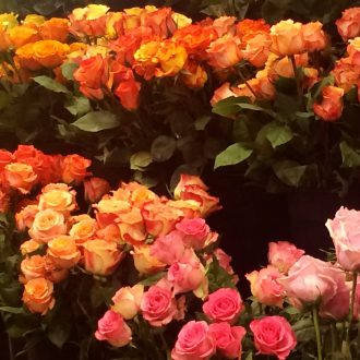colorful roses