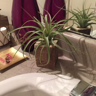 air plant in wood on bathroom vanity